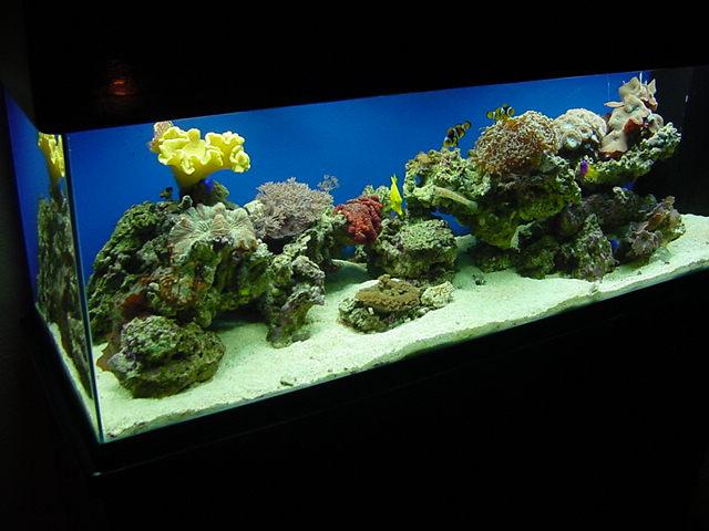 """סלעים חיים ואלמוגים במיכל של 120 ס""""מ"""