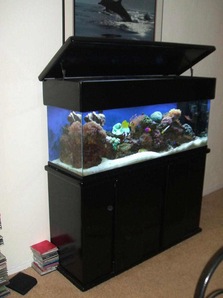מיכל 120 סטנדרטי עם דגים ואלמוגים