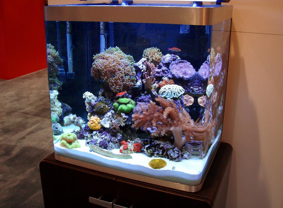 מיני ריף עם דגים ואלמוגים