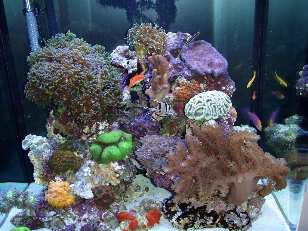 מבט מבפנים של נאנו ריף עם אלמוגים