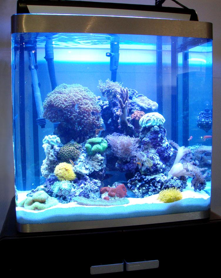 אלמוגים תחת תאורת אקטיניק כחולה