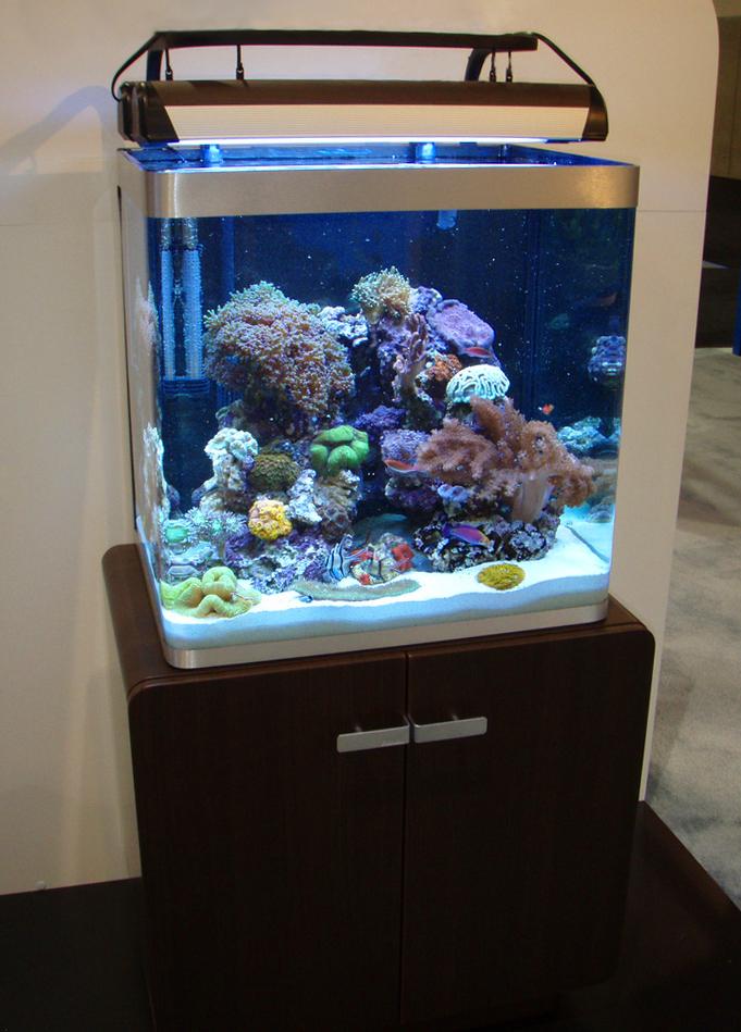 מיכל קטן עם דגים ואלמוגים על שולחן חום