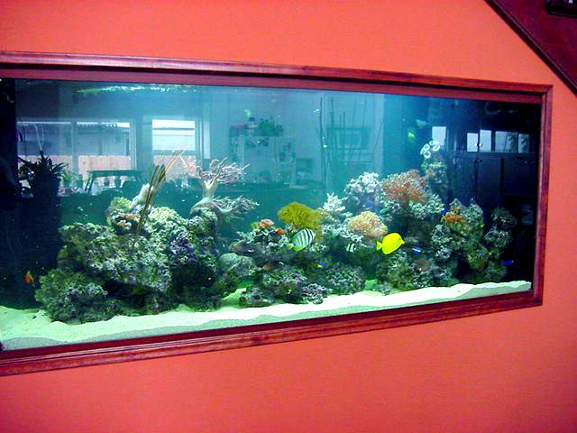 מיכל אלמוגים ודגים מבט מהחזית