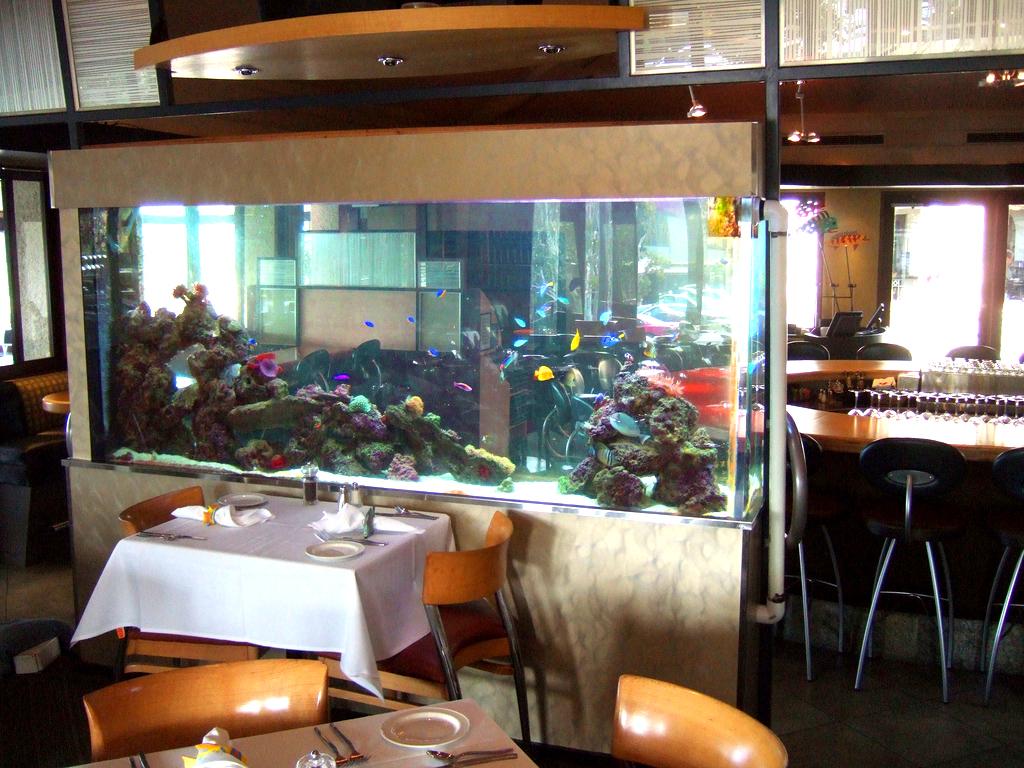 ריף אלמוגים ודגים במסעדה