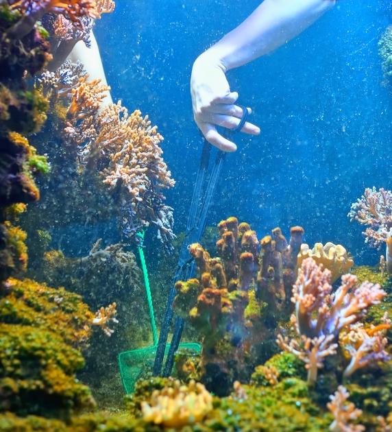 טיפול באמצעות רשת ומלקחים בריף אלמוגים