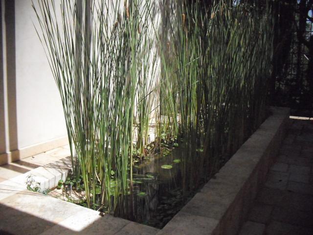 צמחים חיים בבריכת נוי