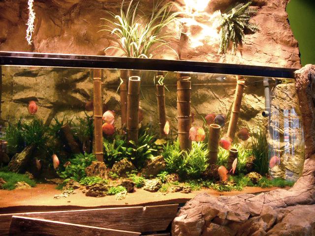 מבט מדופן אחת של דיסקוסים וצמחים חיים