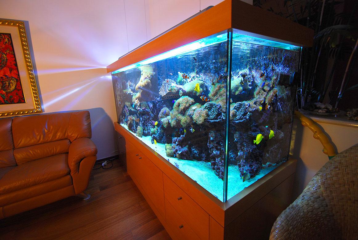 תמונה מזווית אלכסונית של מיכל אלמוגים עם תאורה כחולה